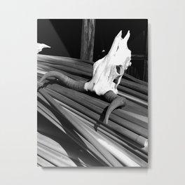 Steer Skull Metal Print