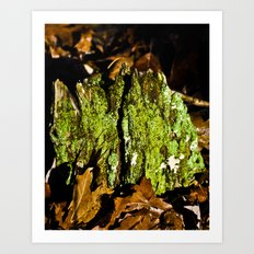 Mountain Moss Art Print