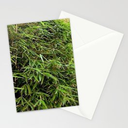 Bamboo Photography Stationery Cards