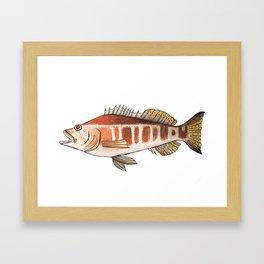 Fish of Portugal: Blacktail Comber Framed Art Print
