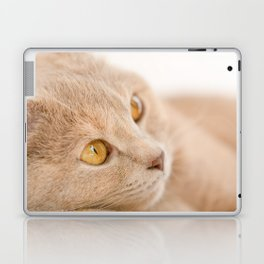 Dreaming cat Laptop & iPad Skin