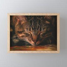 Cat Nap Framed Mini Art Print