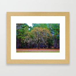 Pine Tree Landscape Framed Art Print