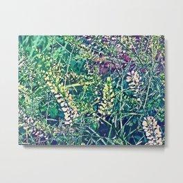 Sweet Grass Metal Print