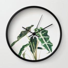 Elephant Ear Wall Clock