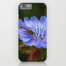 Chicory Flower with a Hoverfly iPhone Case