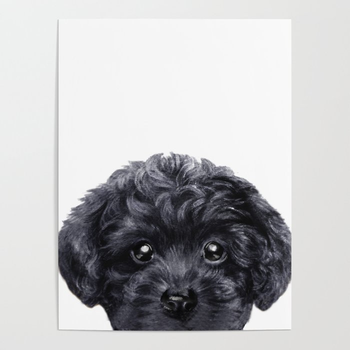 Black Toy Poodle Dog Ilration Original Painting Print Poster