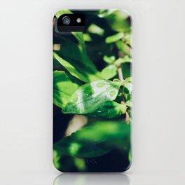 Rain Drops On Plants iPhone Case