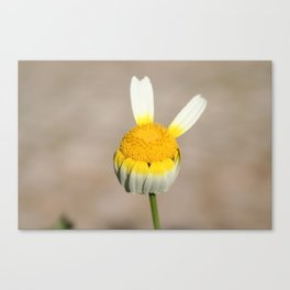 Hippie flower making peace sign Canvas Print