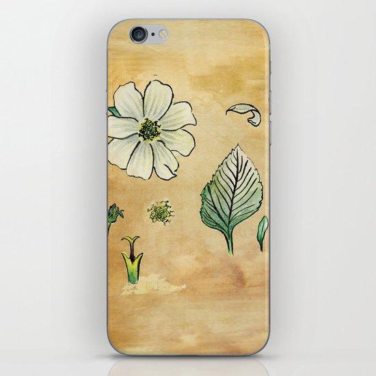 Unknown Flower Study iPhone & iPod Skin