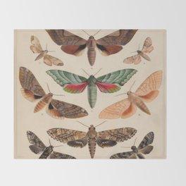 Vintage Natural History Moths Throw Blanket