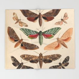Vintage Natural History Moths Throw Blanket