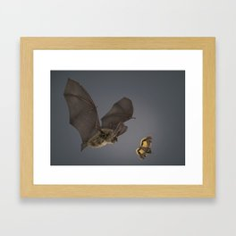 Brown Long-eared Bat Framed Art Print