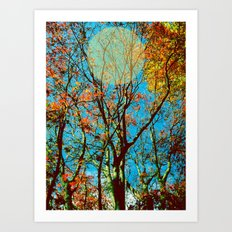 trees - tezza Art Print