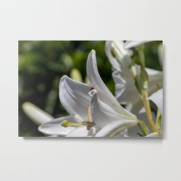 Red insect smiling on a lily Metal Print