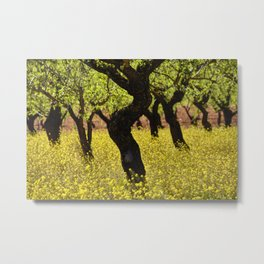 Almonds. Spring Time Metal Print