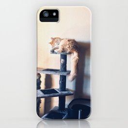 Majestic hood cat iPhone Case