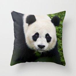 Giant Panda up close Throw Pillow