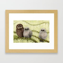 Northern Spotted Owls Framed Art Print
