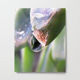 Water Droplet in California Metal Print