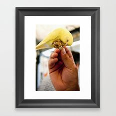 Yellow Parakeet Framed Art Print