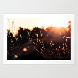 Picture Perfect Morning | Sunrise - Grand Canyon National Park, Arizona Art Print