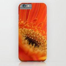 Gerbera Daisy iPhone 6s Slim Case