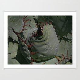 Silvery Green Agave Bud Imprints  Art Print