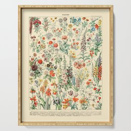 Wildflower Diagram // Fleurs II by Adolphe Millot 19th Century Science Textbook Artwork Serving Tray