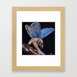 Plebejus Framed Art Print
