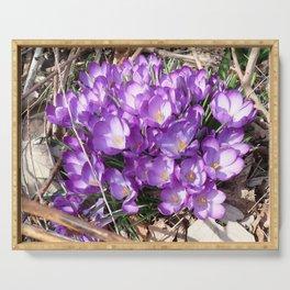 Watercolor Flower, Purple Crocus 01, Washington D.C., Spring Delights! Serving Tray