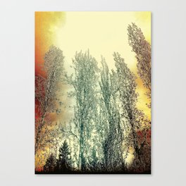 Autumn Poplars, Sunlight Dreaming About You Canvas Print