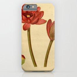 Flower castalia magnifica iPhone Case