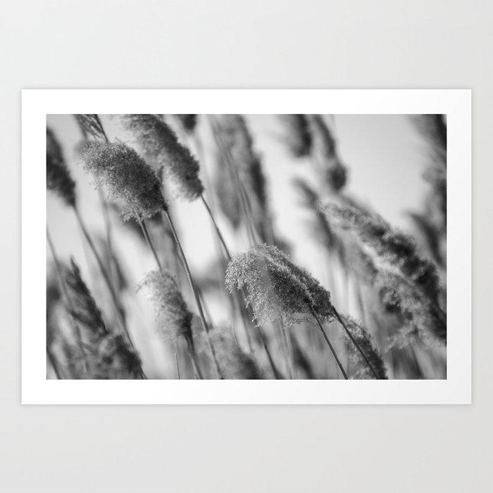 Marsh II Art Print