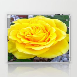 Golden Yellow Rose with Garden Background Laptop & iPad Skin