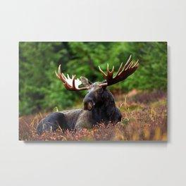 Relax Moose Metal Print
