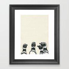 Magellanic Penguins Framed Art Print