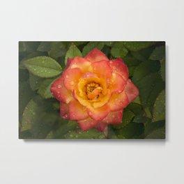 Flower in the rain Metal Print