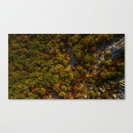 Aerial drone view of amazing autumn colors in fall forest. Canvas Print