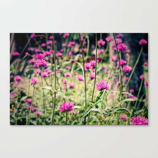 Pink Thistle Flowers in Field Canvas Print