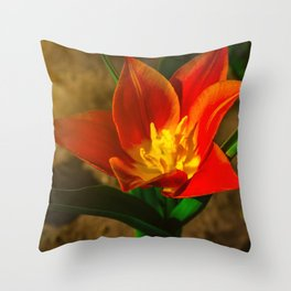 Red flower in the morning sun Throw Pillow
