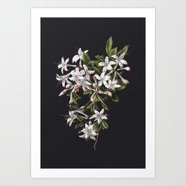Azalia Flower Art Print
