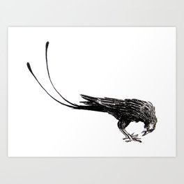 Prong-tailed Raven Art Print
