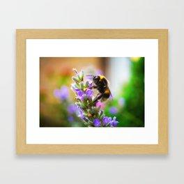 Humble Bumblebee Framed Art Print
