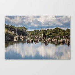 Dead Lakes Florida  Canvas Print