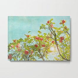 Pink Camellia japonica Blossoms and Sun in Blue Sky Metal Print