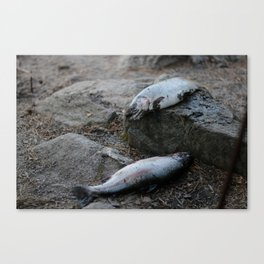 NEWLY CAUGHT Canvas Print