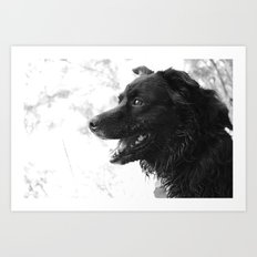 Black Dog Art Print