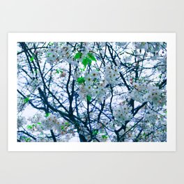 Cherry Blossom (Blue) Art Print