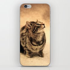 Curious Kitty iPhone & iPod Skin